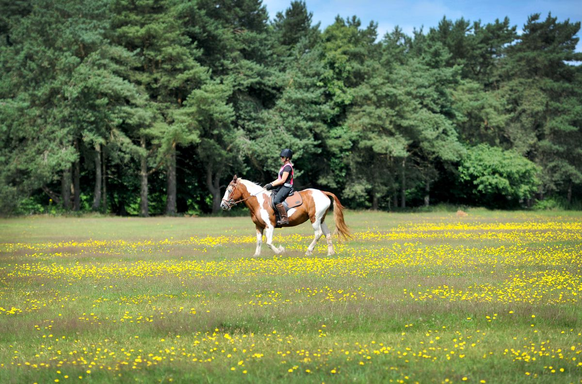 Riding across Cannock Chase
