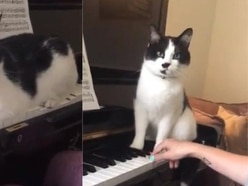Piano playing cat helps students feel more at ease learning music