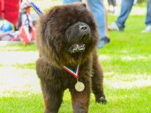 Winners of Halesowen dog show at Highfield Park, Halesowen (Image: SnapperSK)