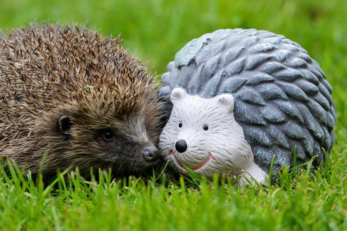 West Midlands hedgehog plea gets to the point