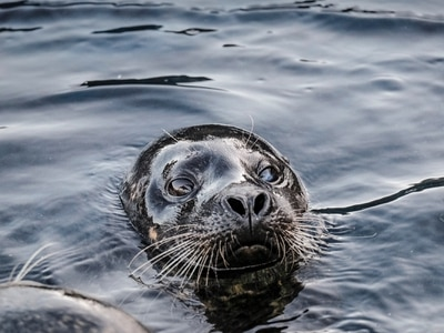 Seals to be homed in new multi-million pound Birmingham Sea Life Centre attraction