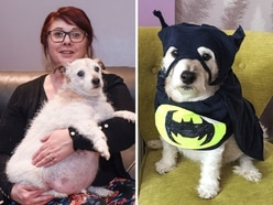 Meet the fat Jack Russell from Wolverhampton who's become an internet sensation