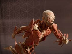World-renowned Real Bodies exhibition opens in Birmingham