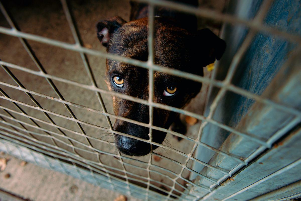 New legislation will help clamp down on puppy farming