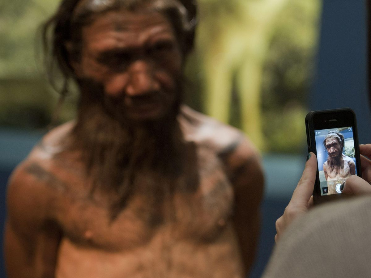 An employee of the Natural History Museum in London looks at model of a Neanderthal male