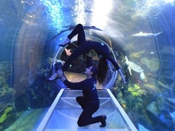 Disney On Ice cast take to new depths at National SEALIFE Centre Birmingham ahead of city shows - in pictures