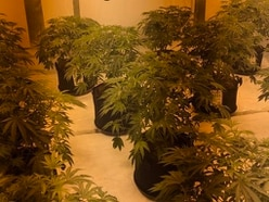 Arrest made as police seize £50k of cannabis in Walsall raid