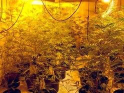 Guns and machetes found at Black Country cannabis farm