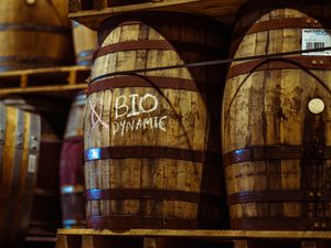 Casks of biodynamic whisky