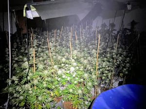 Fire crews found this cannabis farm in Leslie Road, Park Village. Photo: Wolverhampton Fire