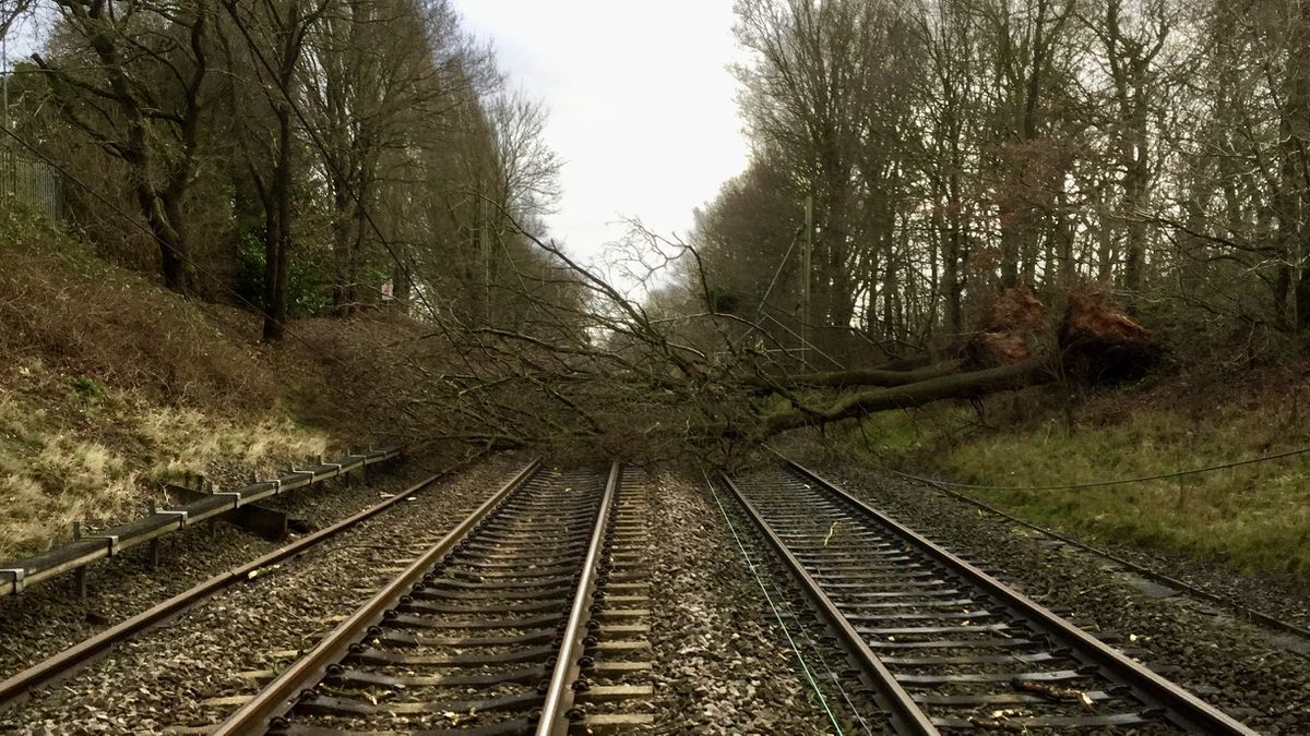 A tree fell blocking the rail line at Four Ashes in Staffordshire after Storm Ciara. Image: Network Rail