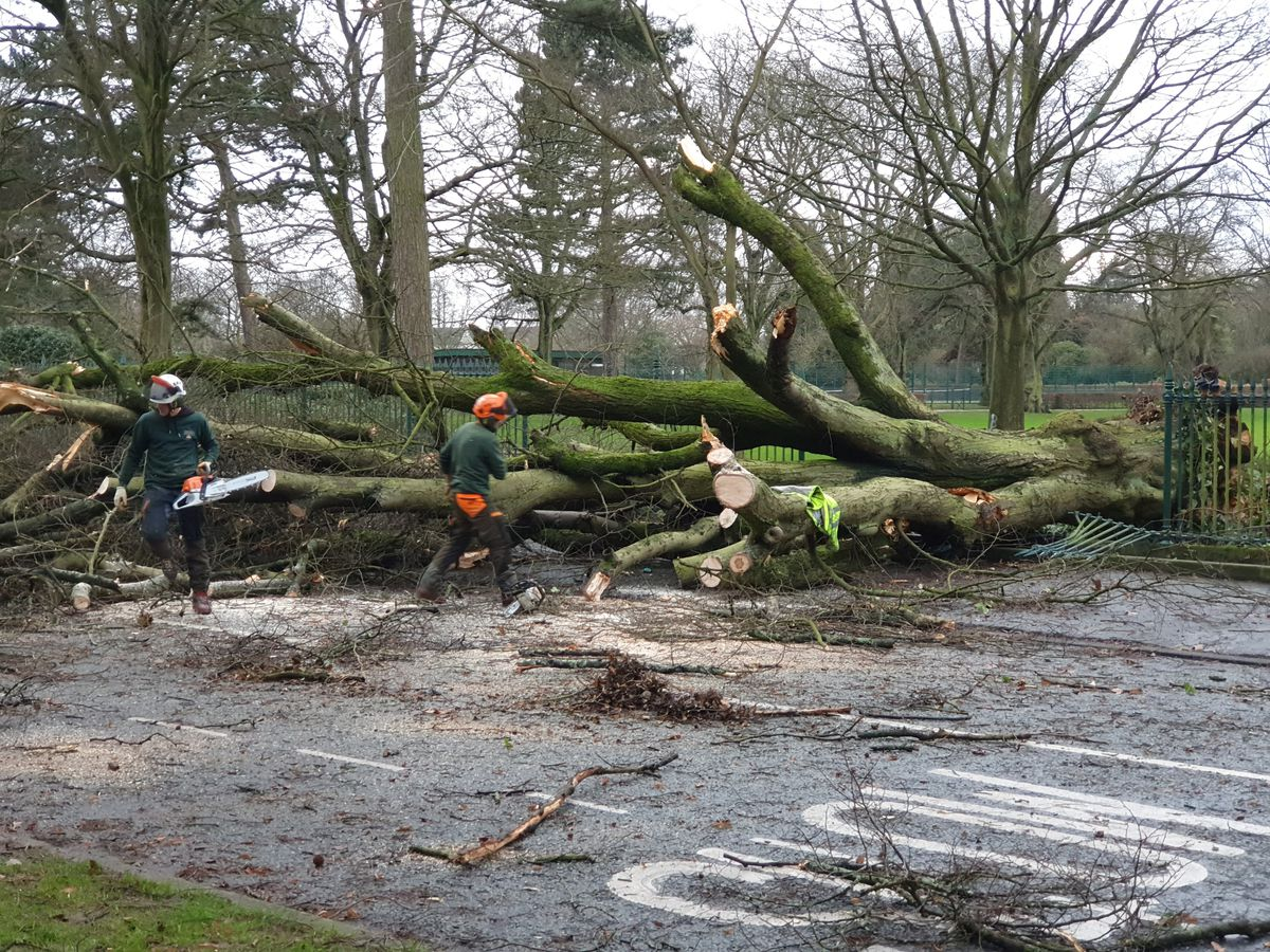 A tree down in West Park, Wolverhampton, during Storm Ciara