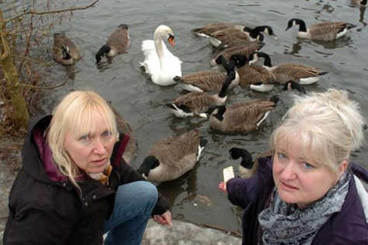 Swan killed after 23 years at pool spot