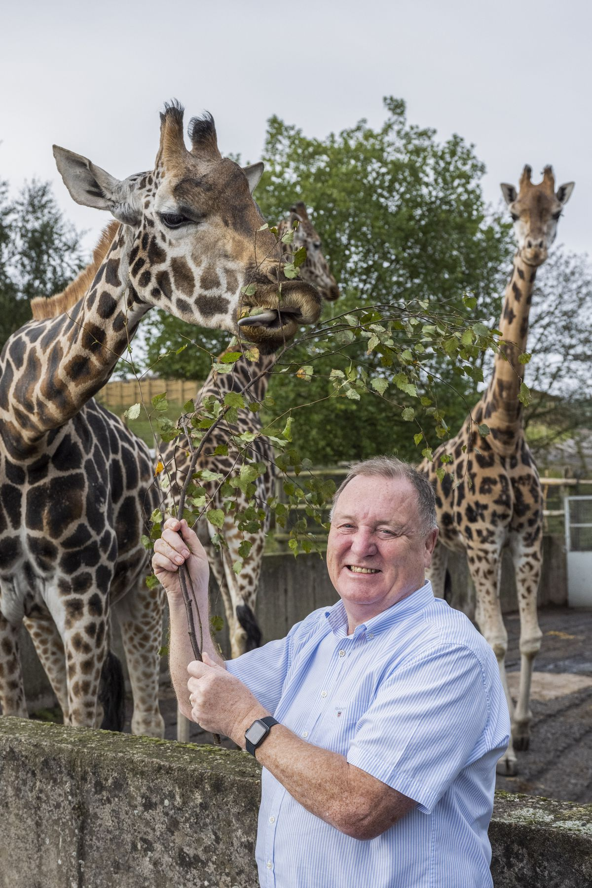 Managing director of West Midland Safari Park, Chris Kelly, with the giraffes who will be getting new homes with the new development