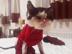 Appeal for sick stray cat Maximus hits £8,000 as foster home wanted