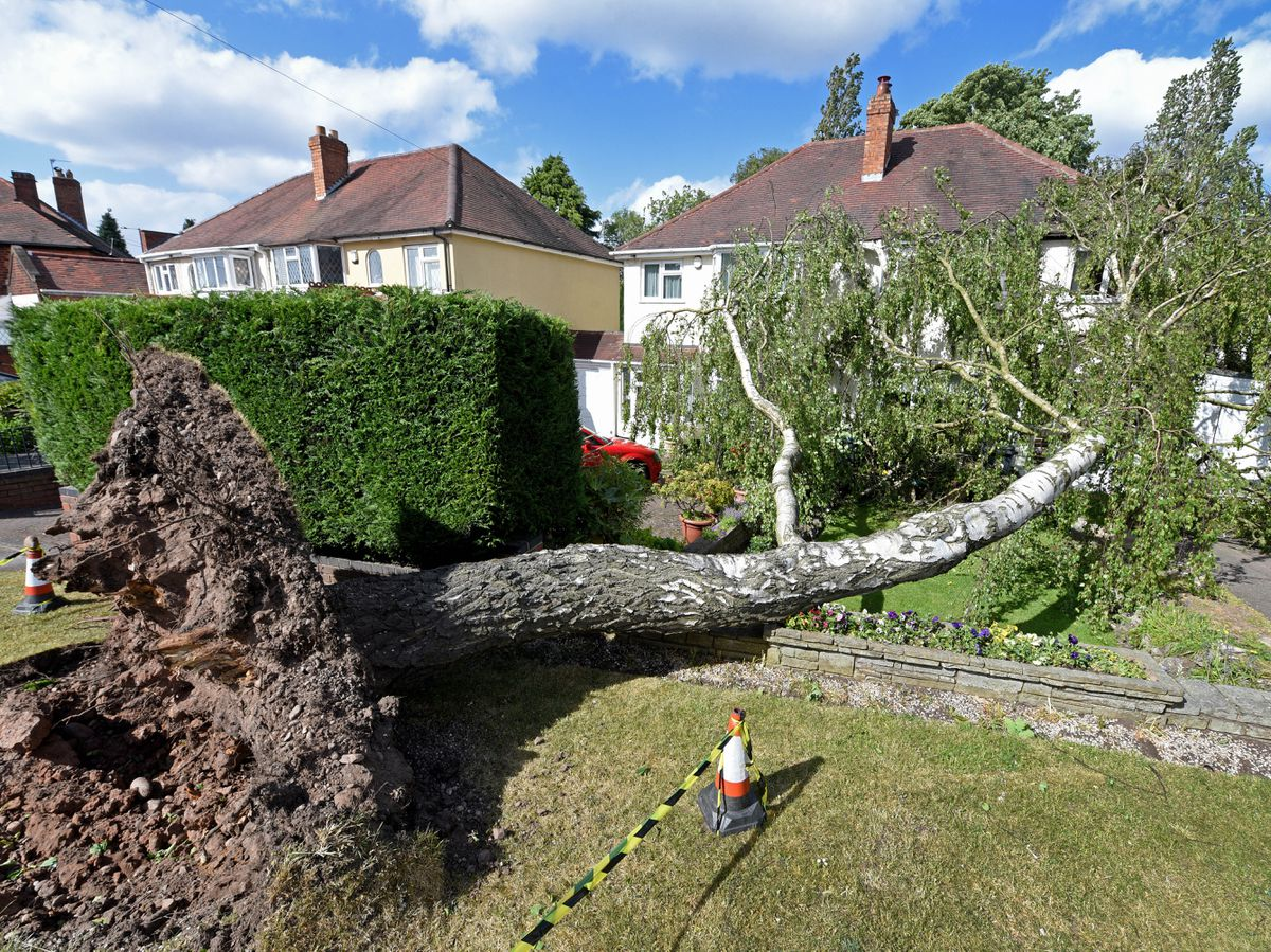 A silver birch tree came down in Bakers Lane, Streetly