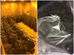 Latvian immigrant caught guarding £60,000 cannabis farm in Wolverhampton