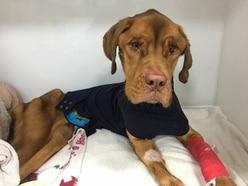 Appeal after starving dog left for dead on freezing nature reserve