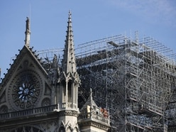 180,000 bees kept on top of Notre Dame cathedral discovered alive