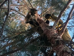 US firefighters rescue very large cat which was stuck up tree
