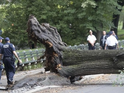 Falling tree injures adult and three children in Central Park