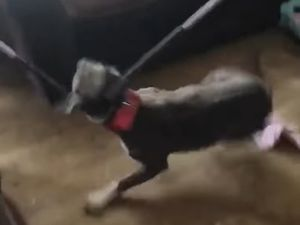Still from a video showing the moment Skye the dog was seized