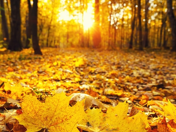 Heather Large: A time to relish changing seasons