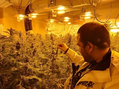 Two men arrested at huge cannabis factory in Wednesbury