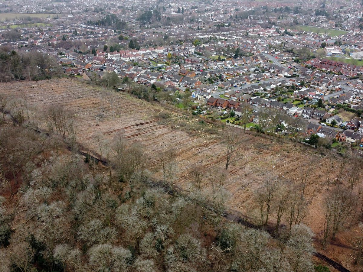 Tree felling is taking place at Ridgehill Woods, Wordsley