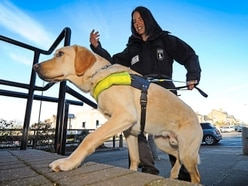 Meet the very special guide dogs leading the way