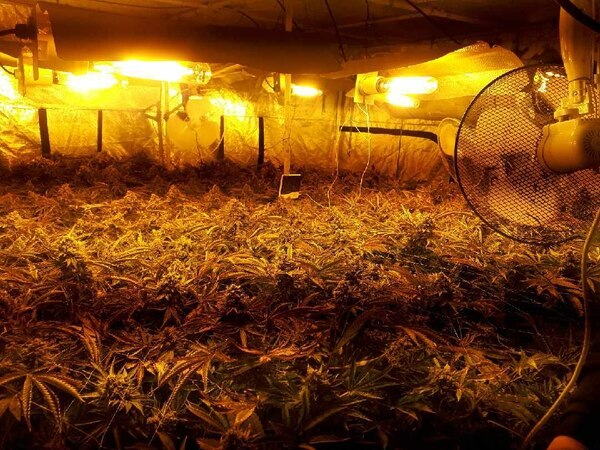 More than £2,500 worth of cannabis seized in Wolverhampton raid
