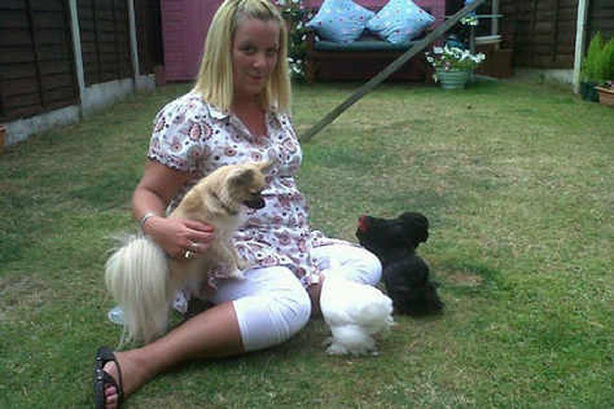 Vandals kill pet hen