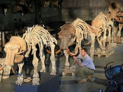 Mammoth sale! Four skeletons tipped to make up to £400,000