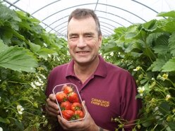 Canalside Farm reopens pick-your-own strawberry service