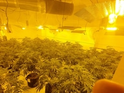 Organised cannabis farm found by police at Walsall house