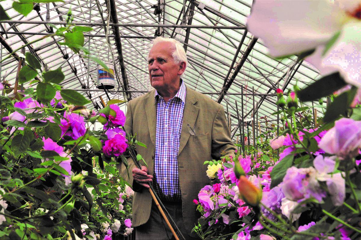 David Austin, of David Austin Roses in one of his greenhouses in Albrighton