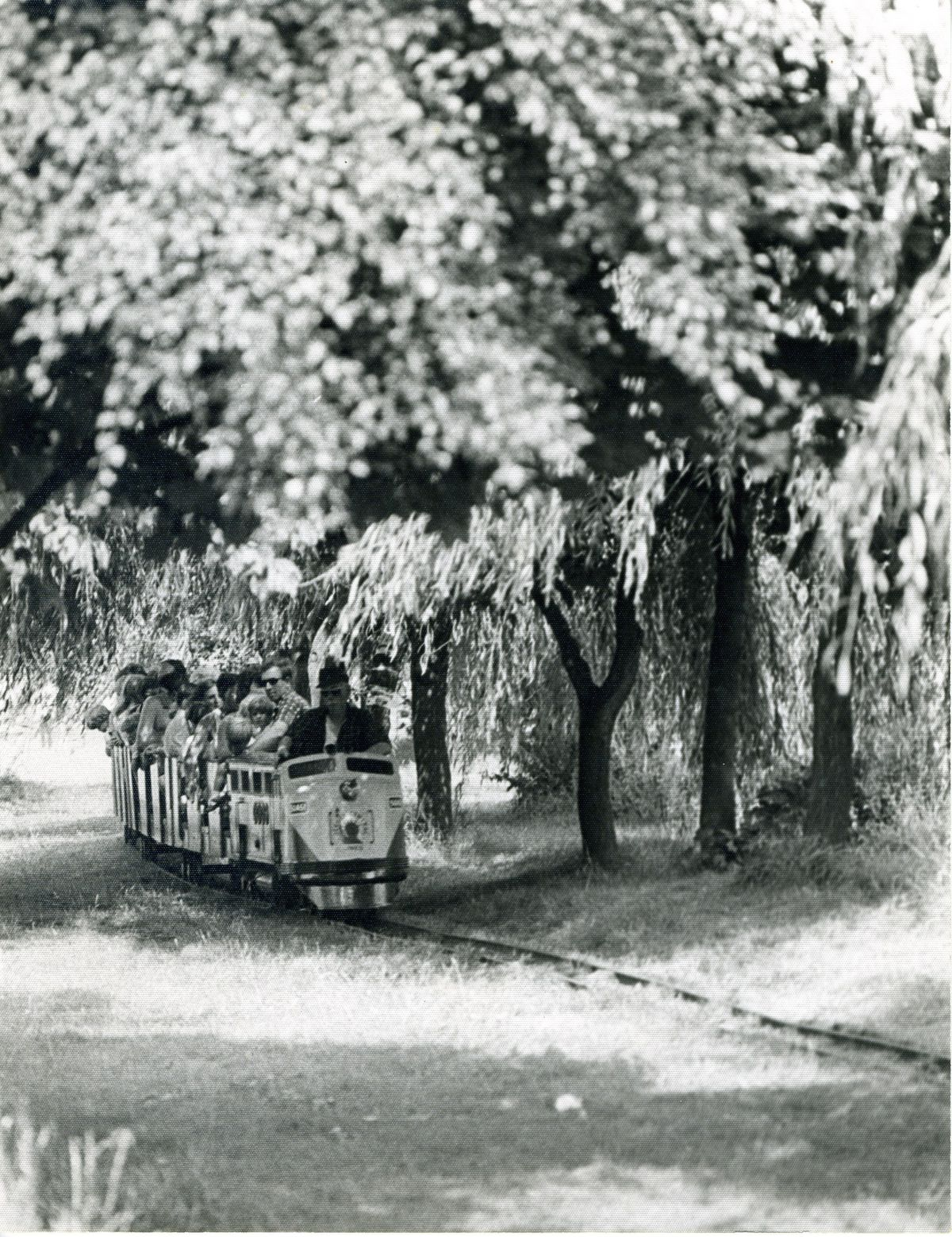 The Drayton Manor train riding through the trees in 1960