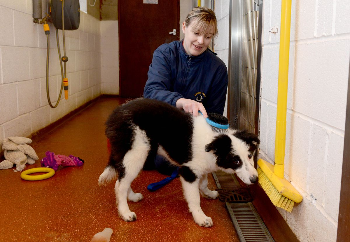 The Border Collie Trust Rescue Centre near Rugeley which have to move location because of the building of HS2 going through their land. Lorna  Marshall with Mabel.