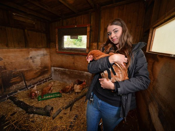 Animal keeper Lydia Parker with the chickens that were dumped at Brockswood Animal Centre.