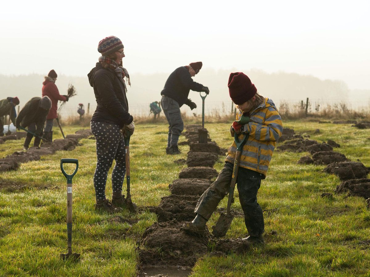 Tree planting to combat climate change