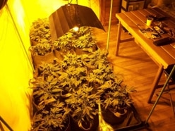 Police find small cannabis farm in Wombourne