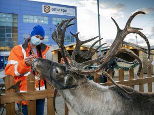 Amazon's Lucia Klanicova visits the reindeer (Image: Richard Grange/UNP)