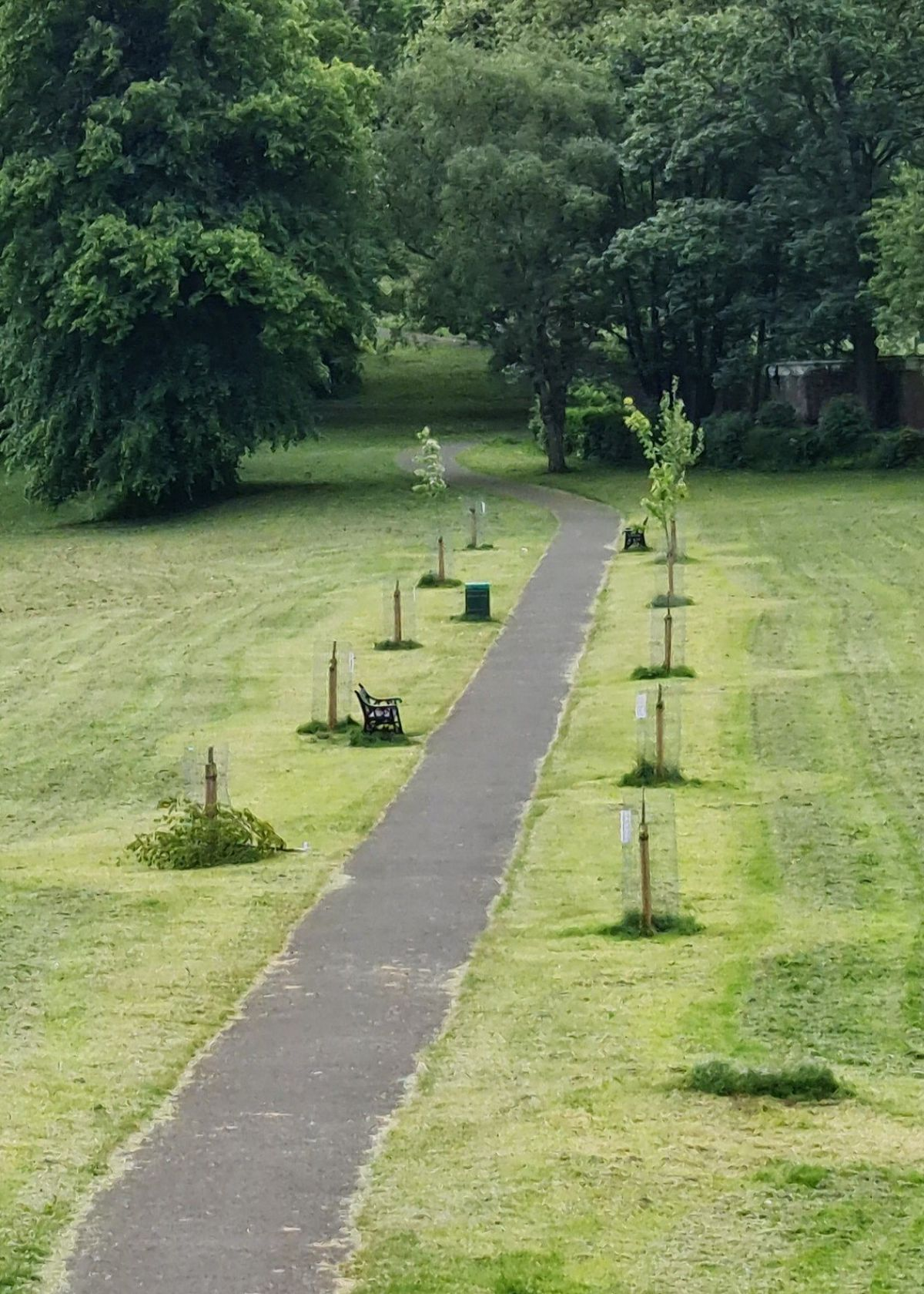 Trees have been damaged across Dudley which has prompted a plea from councillors. Photo: Dudley Council