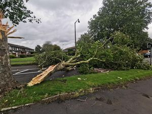A massive tree branch lies on Bromley Lane in Kingswinford after breaking off a tree in high winds (Photo by Anthony Plant)