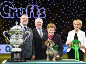 Maisie the wire-haired Dachshund winner of Best in Show 2020 at the Birmingham National with her owner Kim McCalmont (centre right) and presenter Peter Purvis (centre left) at the Exhibition Centre (NEC) during the Crufts Dog Show