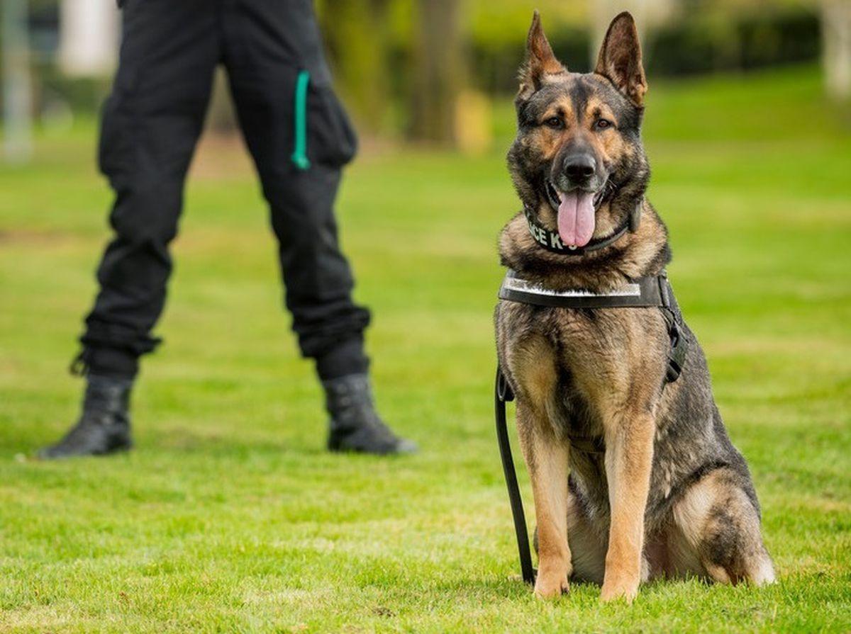 Police Dog Viper. Photo: West Midlands Police