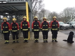 Dog joins in with firefighter training after road rescue