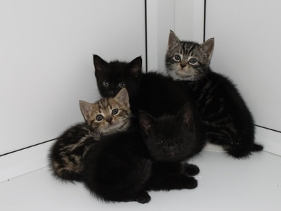 Five kittens rescued from skip about to be crushed in West Bromwich