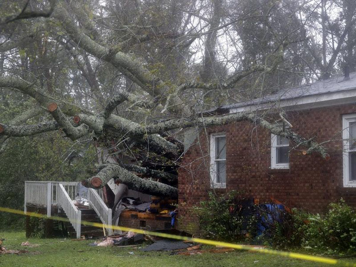 A fallen tree is shown after it crashed through the home where a woman and her baby were killed