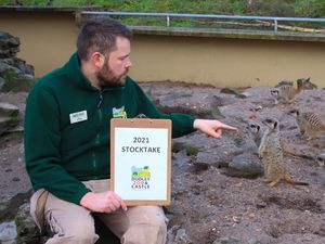 Assistant Curator Jay Haywood counts the meerkat mob